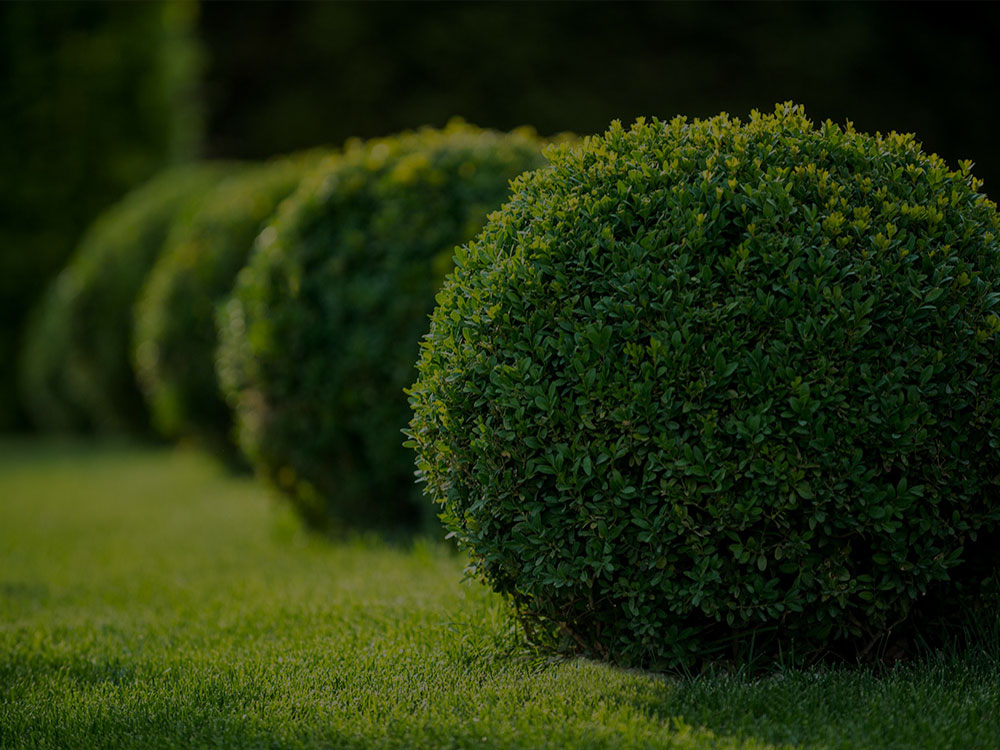 Palm Beach County Landscaping