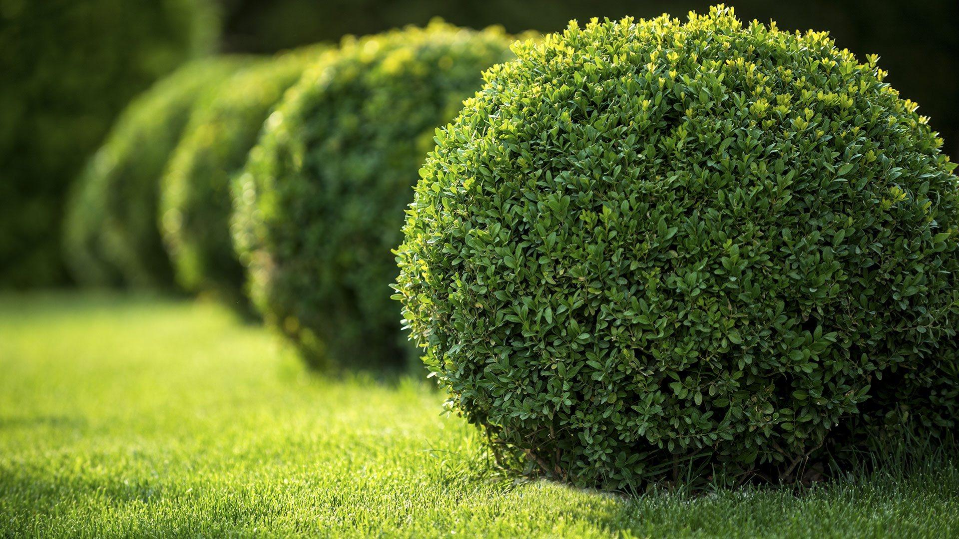 Sawgrass Landscape Inc. Residential Lawn Care, Commercial Property Maintenance and Landscape Design slide 2